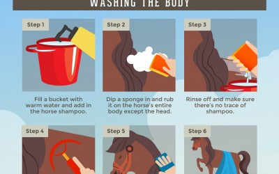 A Step-by-Step Guide to Bathing Your Horse