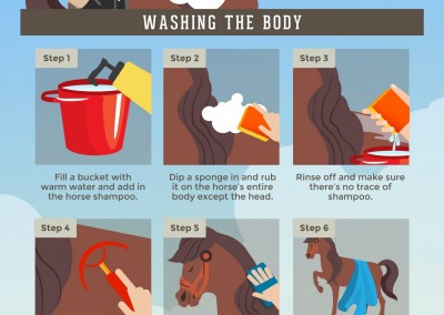 Melbourneseoservices.com Infographics - A Step-by-Step Guide to Bathing Your Horse