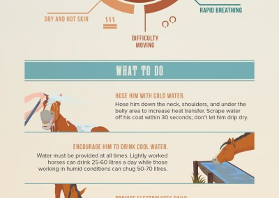 horse heat stress
