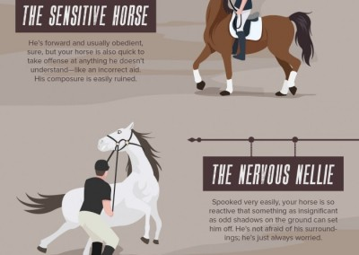 Melbourneseoservices.com Infographics Horse Personality