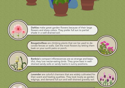 Melbourneseoservices.com Infographics Flowers and Shrubs to Grow this Summer