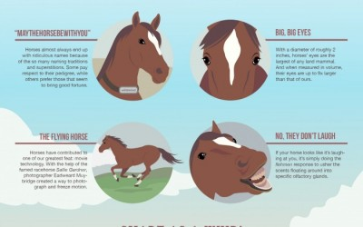 7 Things You (Probably) Didn't Know About Your Horse