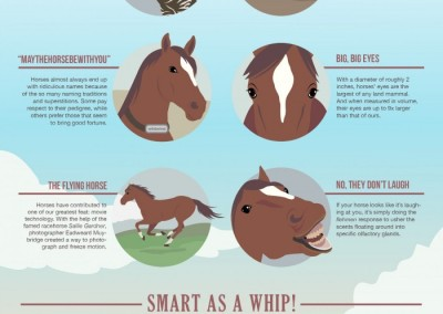 Melbourneseoservices.com Infographics - 7 Things You (Probably) Didn't Know About Your Horse