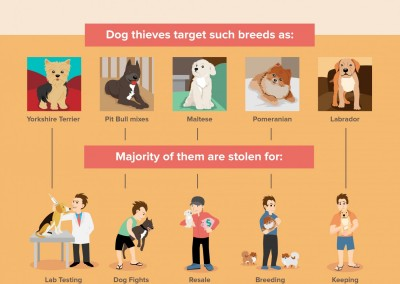 melbseo-infographic-dognapped