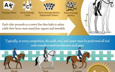 Dressage: Facts for Equestrian Lovers