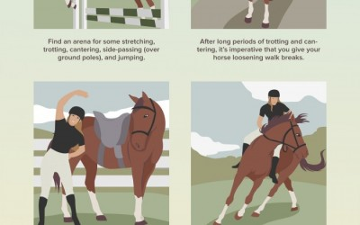 Strength Exercises for Your Horse