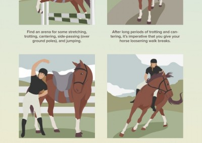 Melbourneseoservices.com Infographics - Strength Exercises for Your Horse