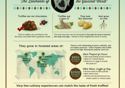 Melbourneseoservices.com Infographics - What You Need To Know About Truffles