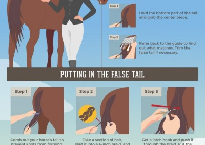 Melbourneseoservices.com Infographics - Horse Grooming Tips - A Step-by-Step Guide to Adding False Tails