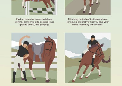 strength-exercises-for-your-horse-web